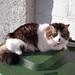 Rosie sunning herself on the bin