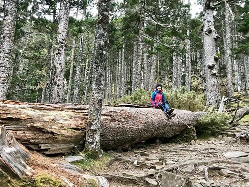 黑森林超級美的啦!