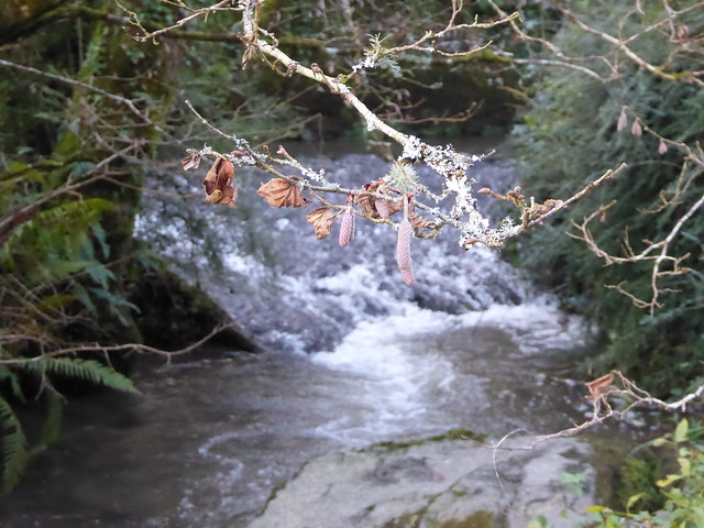Catkins and running water in the Blackpool Valley