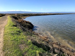 KingTide_Alviso_Dec2017_2