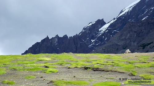 Torres del Paine N.P.