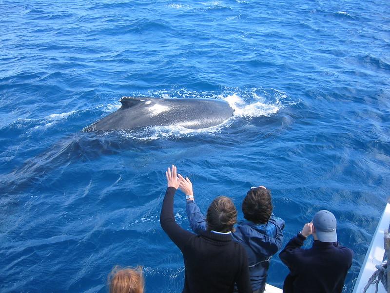 Humpback whales Pacific Ocean