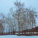 Natirar in snow-01886 by Visual Thinking (by Terry McKenna)
