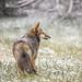 Darksnout, first snow by Steven David Johnson
