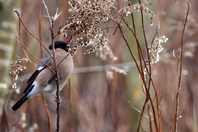 Birds of Rieselfeld IV