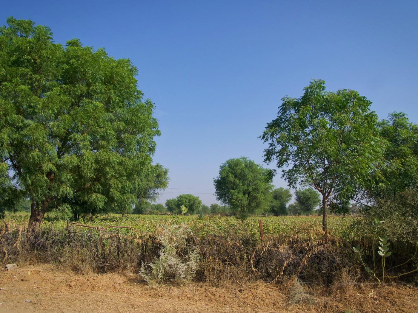 473-India-TharDesert