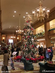 Festival of Trees and Teddy Bear Suite at Fairmont Olympic Hotel