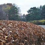 Fluffy Dead Leaves