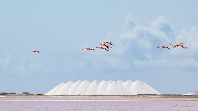 Take-Off to Bonaire!