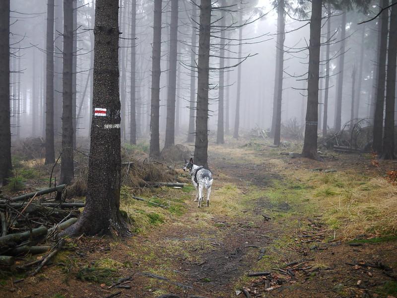 góry sowie psem