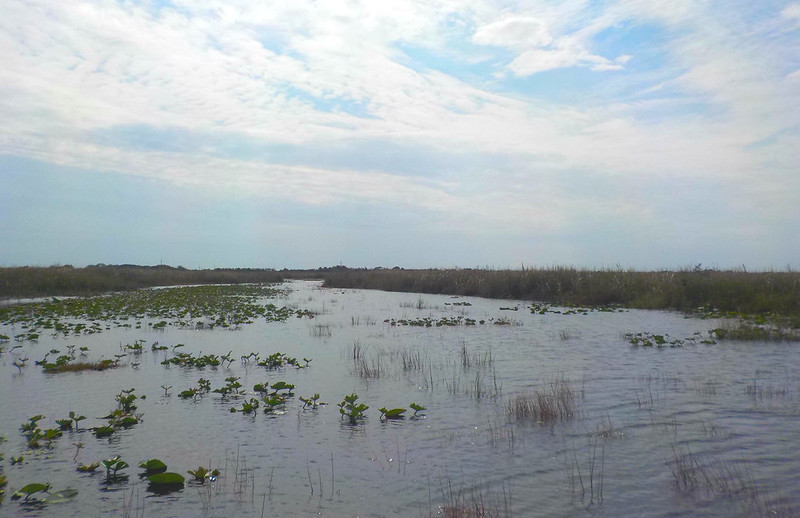 Everglades 12