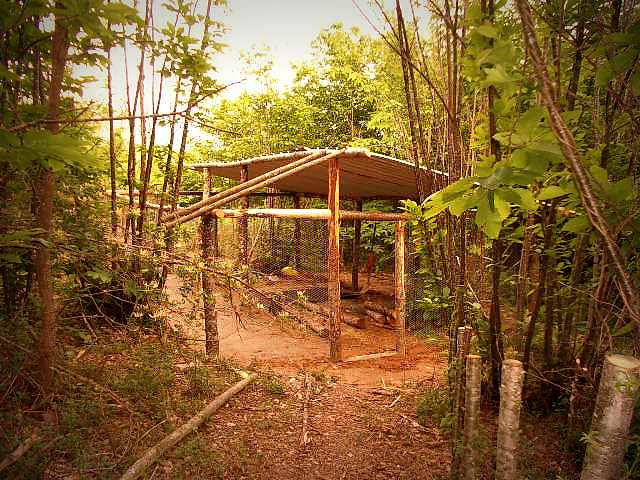 The chicken shed in the woods being built