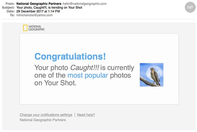 Your photo Caught is trending on Your Shot