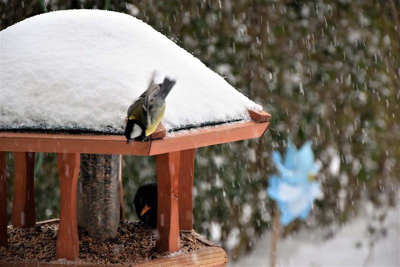 Birdhouse 10.12 (17)