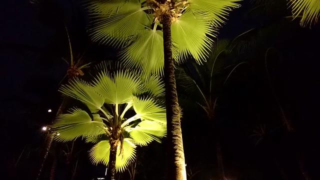 Christmas in Waikiki