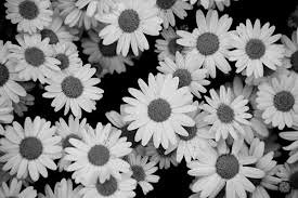 koreanapps-flowersearch16