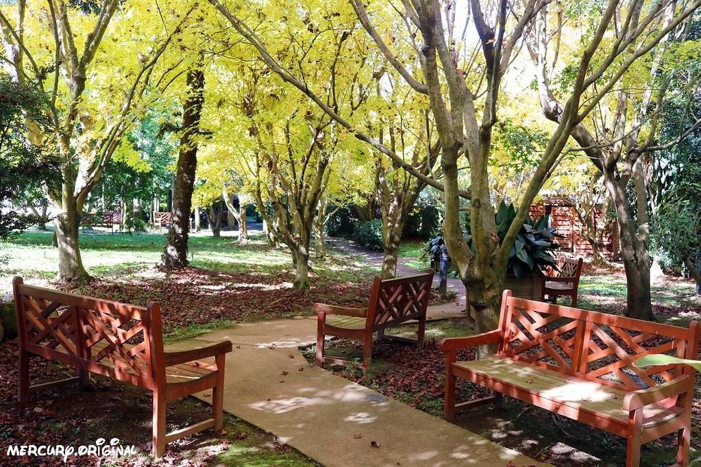 38310986045 af4ae178f2 b - 熱血採訪|新社千樺花園餐廳,森林裡的玻璃屋咖啡廳,品嚐無菜單法式料理