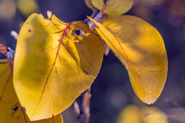 Leaf in December