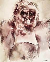 Gorilla lisboa