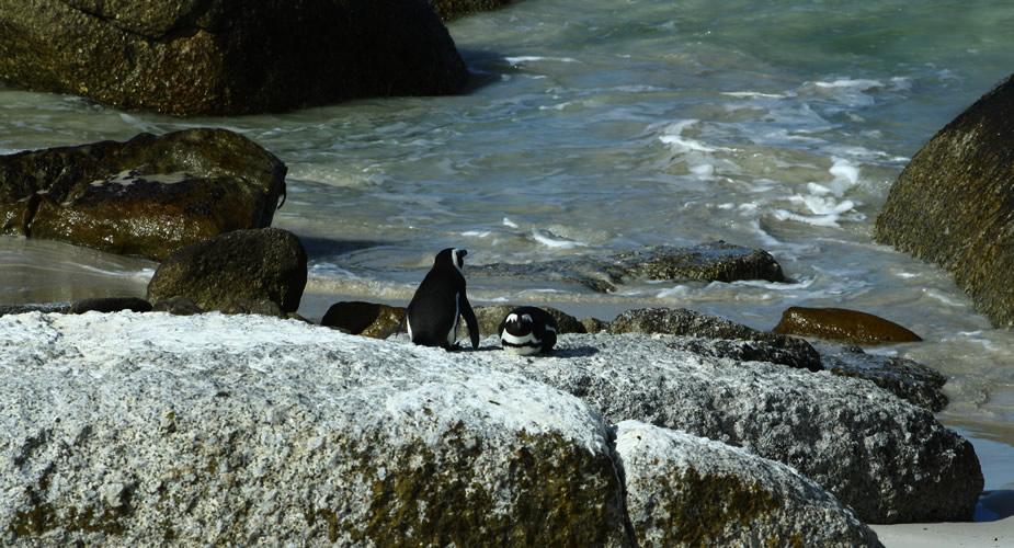 Rondreis Zuid-Afrika: dagtrip naar Kaap de Goede Hoop en Boulder's Beach | Mooistestedentrips.nl