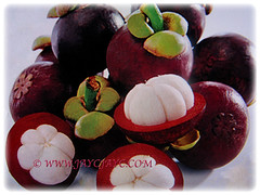 Round fruits of Garcinia mangostana (Mangosteen, Purple Mangosteen, Manggis in Malay) that are covered by an inedible and reddish-purple rind, 14 Dec 2017