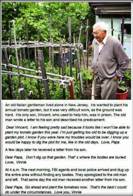 Gramps tomatoes