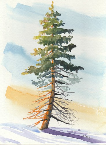 Incomplete Pine