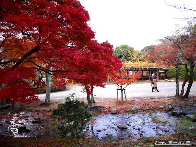 八阪神社45