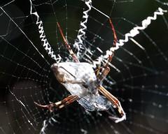 spider legs