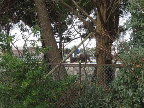 金沢競馬場の走路を裏から見る