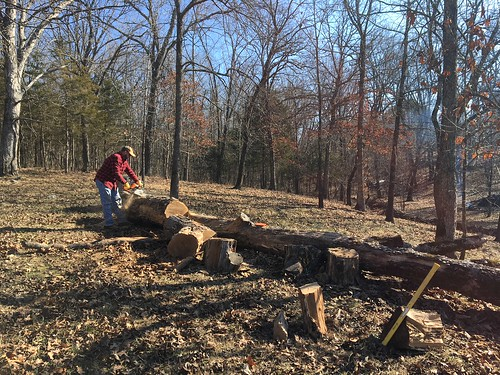 Cutting Firewood in Cape Fair, Missouri