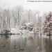 Central Park Pond (20171209-DSC04409)