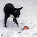 Julie-Schnee 10-12-17-1.jpg