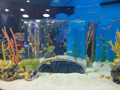 Clownfish (1) #toronto #ripleysaquarium #aquarium #fish #clownfish #latergram