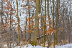 Fall meets winter - Chagrin River Park