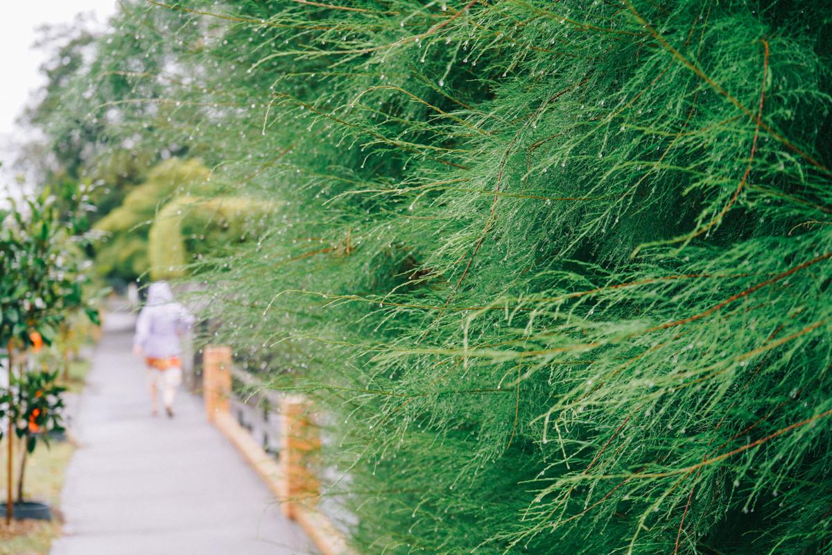 Green after rain