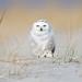 Snowy Shopper Shock  3I5563 by Dr DAD (Daniel A D'Auria MD)