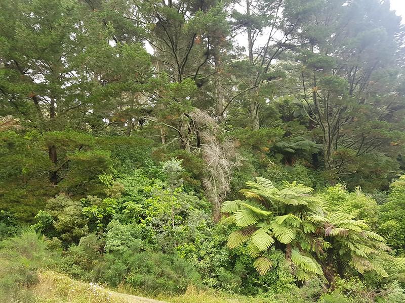 NZ Holiday day 7 Rotorua