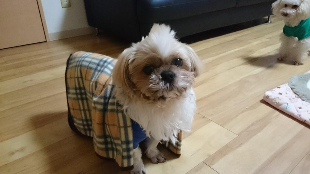 犬の寒さ対策とブランケット