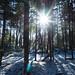 Voyageur Trail