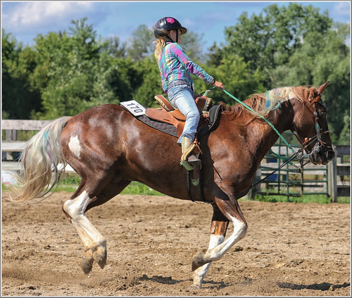 canon eos 70d 70200mm ef70200f4l psp2018 paintshoppro2018 paris ontario canada fair horses horse barrelracing sport efex topaz action