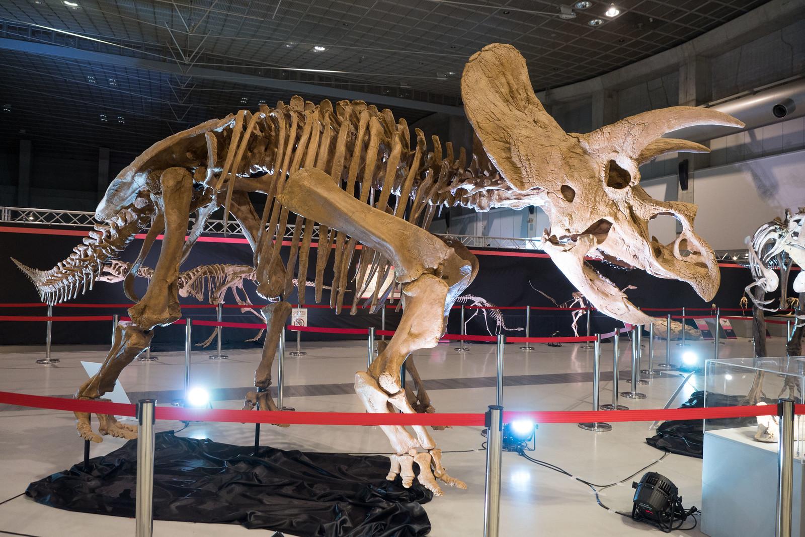 大恐竜博-44