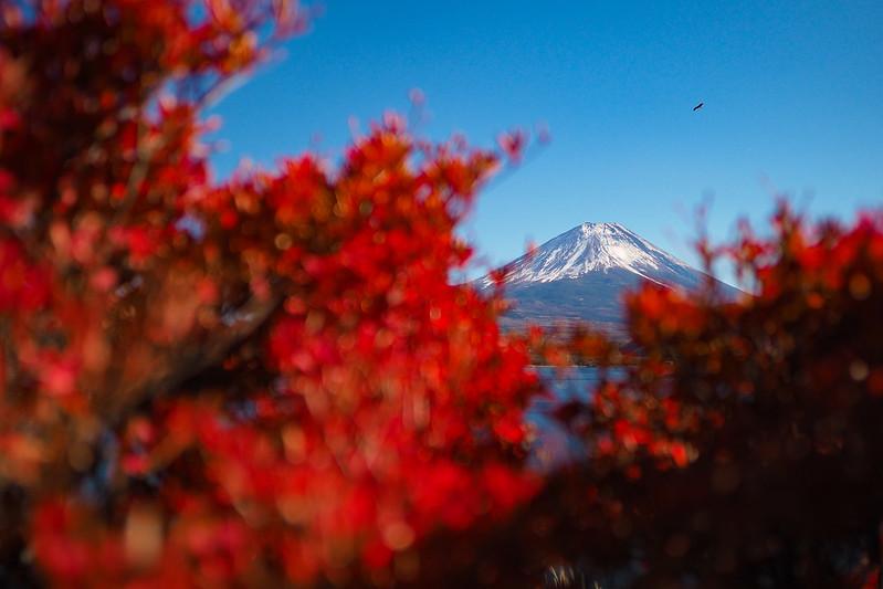 富士山紅|Fujisan