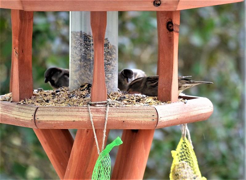 Sparrows 25.12 (10)