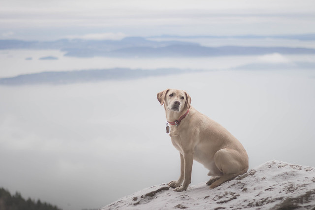 Summit dogs on Oyster Dome