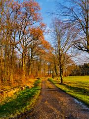 The Lightnened Path (O89)