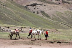 Horses and handlers for the trek to Rainbow Mountain (Vinicunca), Peru