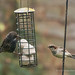 My Turn Please - Bird Feeder (30)