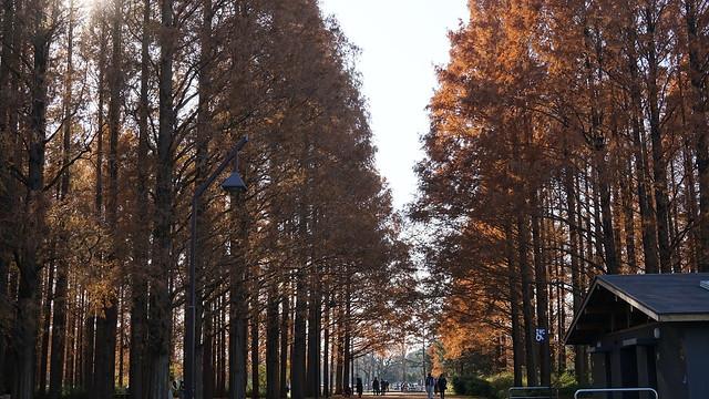 DSC05908水元公園