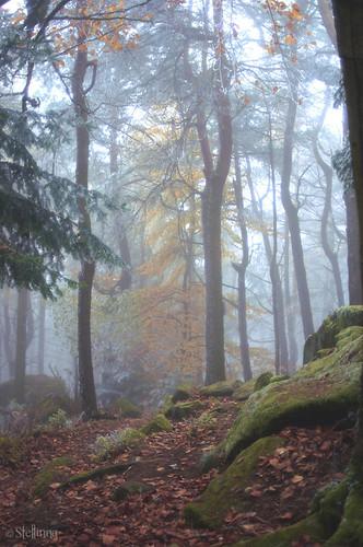 Somewhere between fall &  winter